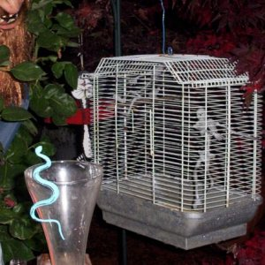 This bird cage with skellys in it is my most often complemented prop.