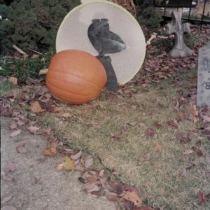 The Great Pumpkin Charlie Brown prop that inspired me when Mr. Big was growing in the pumpkin patch.